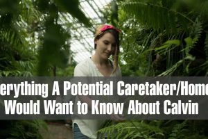Everything a Potential Caretaker would want to know